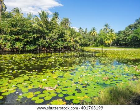 Anchialine pool and wetlands adjacent to Punaluu Beach - stock photo