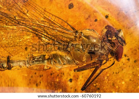Ancient amber and dragonfly - stock photo