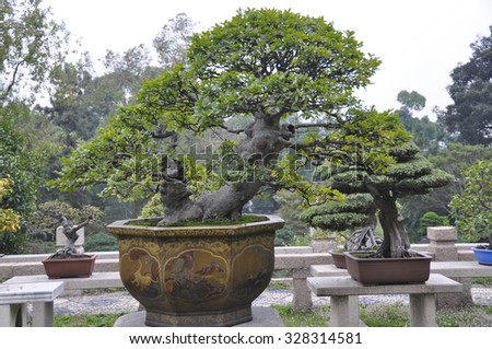Ancient art botanical in a chinese decorative garden - stock photo