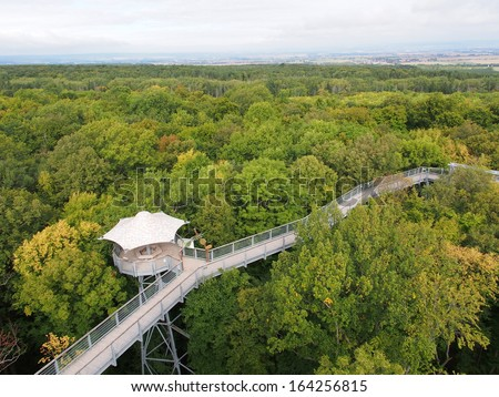 Ancient Beech Forest of Hainich National Park, Germany - stock photo