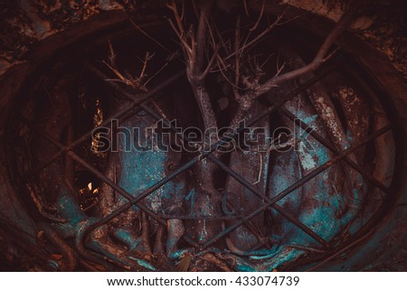 Ancient brick wall with tree roots grow through the window with metal rods. Miami, USA, Florida, Key Biscayne. USA  - stock photo