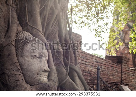 Ancient Buddha Statue in tree roots at Mahatat Temple, Ayuttaya, Thailand - stock photo