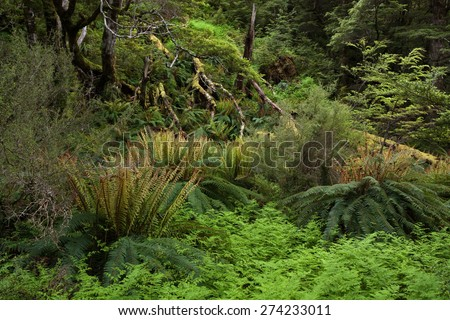 Ancient Forest - Green forest landscape with ferns and lichens.