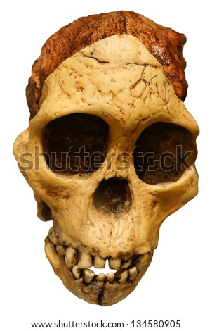 Ancient human skull isolated on white background - stock photo