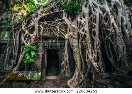 Ancient Khmer architecture. Ta Prohm temple with giant banyan tree at Angkor Wat complex, Siem Reap, Cambodia travel destinations - stock photo