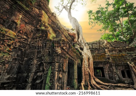 Ancient Khmer architecture. Ta Prohm temple with giant banyan tree at sunset. Angkor Wat complex, Siem Reap, Cambodia travel destinations  - stock photo