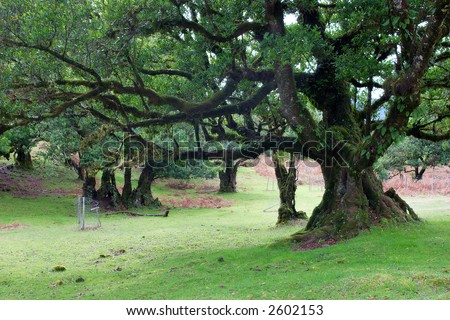 Crooked tree Stock Photos, Crooked tree Stock Photography, Crooked