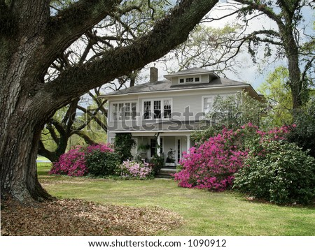 ancient live oaks surround turn of the century National Register home in springtime - stock photo