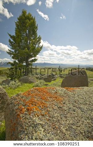 Ancient orange lichens growing on rocks in Centennial Valley near Lakeview, Montana - stock photo