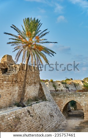 Ancient ruins of crusader's fort with palm under blue sky - stock photo