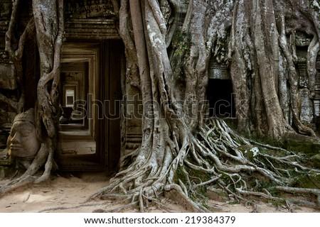 ancient stone door and tree roots, Angkor, Cambodia - stock photo