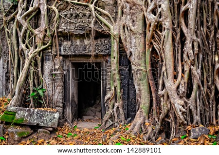 Ancient stone temple door and tree roots, Angkor Wat, Cambodia - stock photo