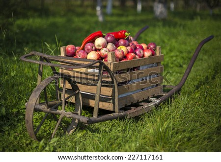 ancient wheelbarrow with a crate of apples - stock photo