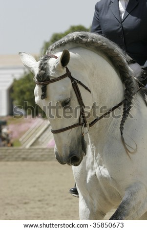 Andalusian Dressage - stock photo