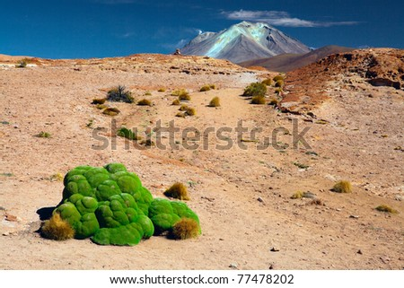 andes altiplano landscape with green moss like bromelia and the peak of a volcano the plant is found in the mountains of Bolivia Peru and Chili