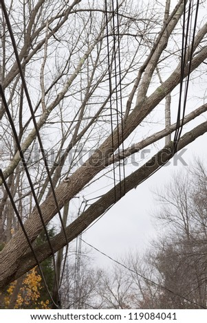 ANDOVER, NJ - OCT 30: A tree laying across three sets of power lines over a road after Hurricane Sandy moved across the northeast in Andover, New Jersey on October 30, 2012. - stock photo