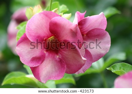 Andromeda Botanical Gardens, Barbados - stock photo