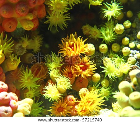 anemone - stock photo