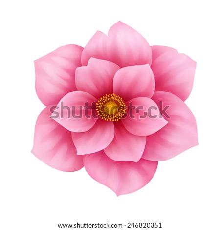 Anemone pink flower decorative illustration isolated on white background - stock photo