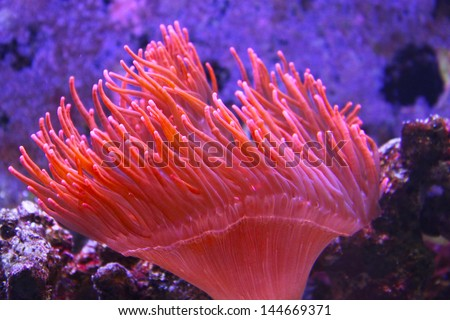 Anemone     Save to a lightbox ?          find similar images    share share ?    Anemone - stock photo