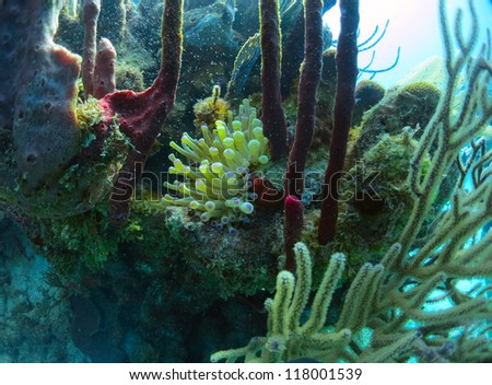 Anemone with Coral - stock photo