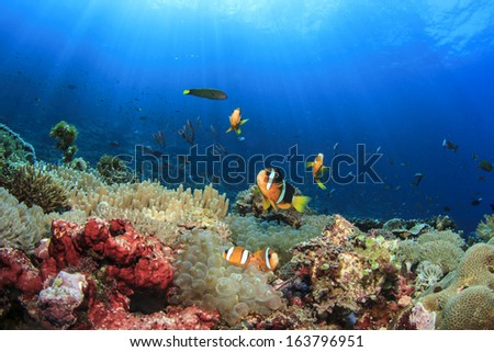 Anemones and Clownfish on underwater coral reef