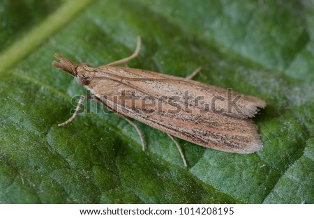 Pyralidae - definition of Pyralidae by The Free Dictionary