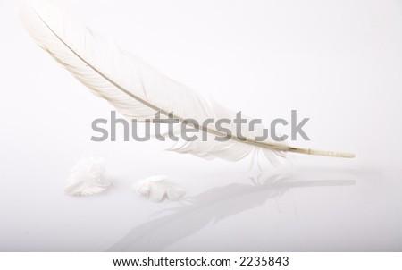 angel feather, plume, leaf, plumage - stock photo