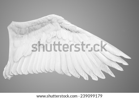 Angel wings isolated on gray background. - stock photo