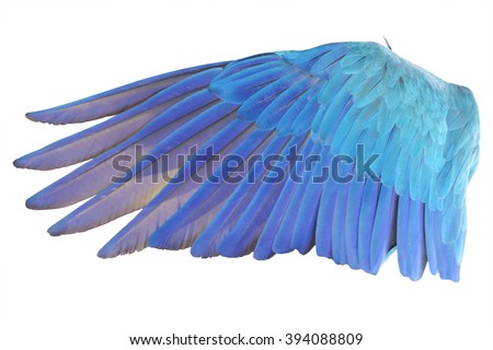 Angel wings isolated on white background. This has clipping path. - stock photo