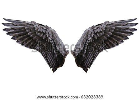 Angel wings, Natural black wing plumage isolated on white background with clipping part