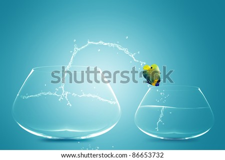 Angelfish jumping to small bowl, Good Concept for bad choice, bad Opportunity, Failure and Stupidity concept. - stock photo