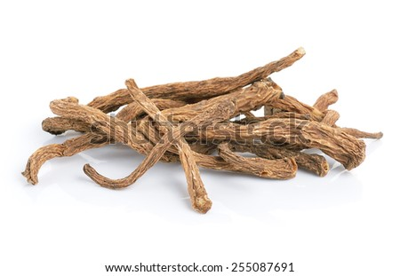 angelica sinensis herb on white background - stock photo