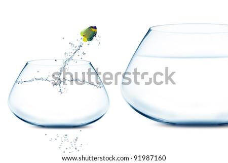Angle fish jumping into bigger fishbowl. - stock photo