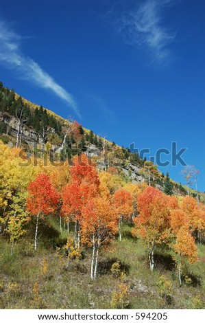 Angled Cirrus and Brilliant Fall Color on McClure Pass