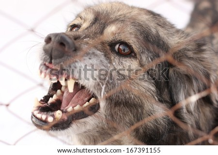 Angry barking dog in a steel cage - stock photo