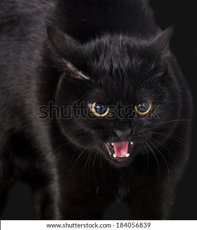 angry black cat portrait - stock photo
