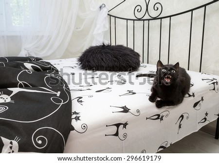 angry black domestic cat lying on the bed. animal, mammal - stock photo