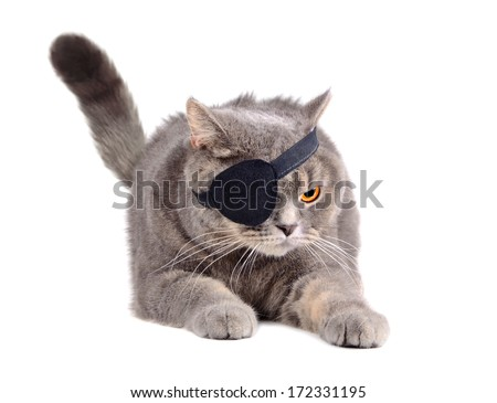 Angry British cat in caribbean pirate costume with eye patch on white background - stock photo