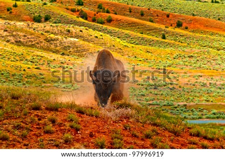 Angry Buffalo ready to charge on the  red dirt prairie in Thermopolis Wyoming - stock photo
