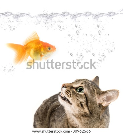 angry cat and gold fish on white - stock photo