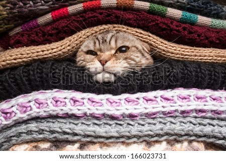 angry cat is preparing for winter, wrapped up in a pile of woolen clothes - stock photo