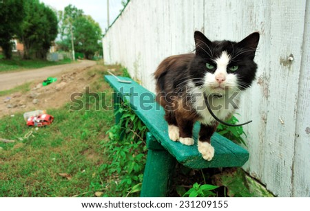 angry cat looking - stock photo