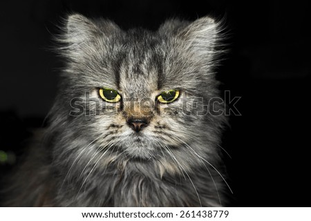 Angry cat looking at the camera - stock photo