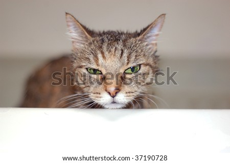 angry cat taking a bath in the tub - stock photo