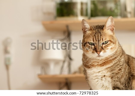 Angry cat with unhappy expression standing on desk in home. - stock photo