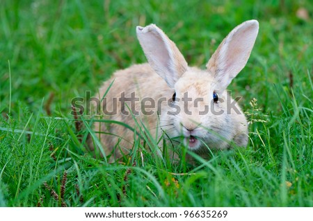Angry Cute Rabbit - stock photo