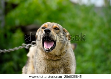 Angry dog - stock photo