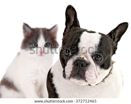 Angry dog and happy cat, isolated on white - stock photo