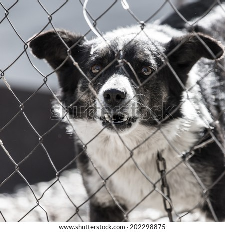 angry dog �¢??�¢??behind a fence
